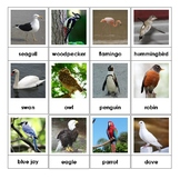 Montessori Nomenclature 3-Part Cards - BIRDS - Vocabulary,