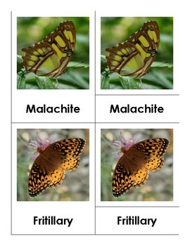 Montessori Nomenclature 3-Part Cards - BUTTERFLIES - Vocabulary, Science, Insect