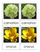 Montessori Nomenclature 3-Part Cards - FLOWERS - Vocabulary, Science, Botany