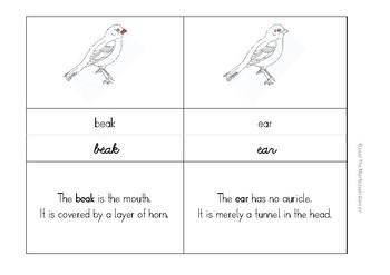 Montessori Nomenclature Cards: Parts of a Bird