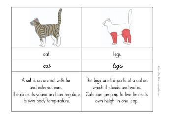 Montessori Nomenclature Cards: Parts of a Cat