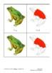 Montessori Nomenclature Cards: Parts of a Frog