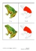 Montessori Nomenclature Cards: Parts of a Frog