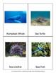 Montessori Ocean Animals 3 Part Cards and Ocean Zones Labels