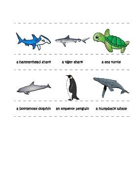 Montessori Ocean Life 3-Part Cards