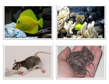 Montessori PETS Animal Matching Cards-Parent to Baby-Science, Zoology