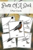 Montessori Parts Of A Bird 3 Part Cards