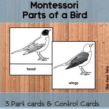 montessori parts of a bird 3 part cards tpt