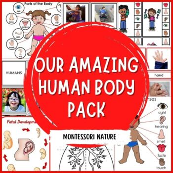 Montessori Parts Of The Body Cards