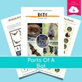 Montessori Parts of Bat 3 Part Cards PDF   education PDF,
