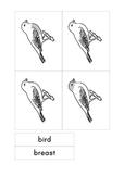 Montessori Parts of a Bird 3-part cards
