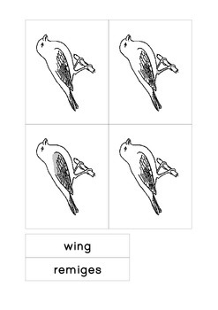 Montessori Parts of a Bird 3-part cards