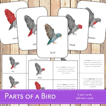 Parts of a Bird Montessori 3 Part Cards