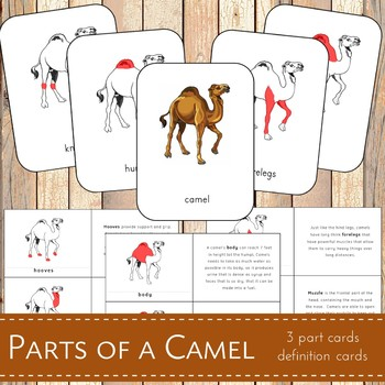 Parts of a Camel Montessori 3 Part Cards