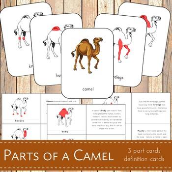 Parts of a Camel Montessori 3 Part Cards