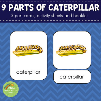 Parts of a Caterpillar Montessori 3 Part Cards