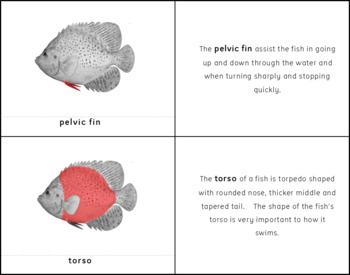 Parts of a Fish Montessori 3 Part Cards