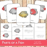 Parts of a Fish Montessori 3 Part Cards