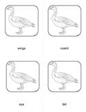 Montessori Parts of a Goose 3 Part Cards