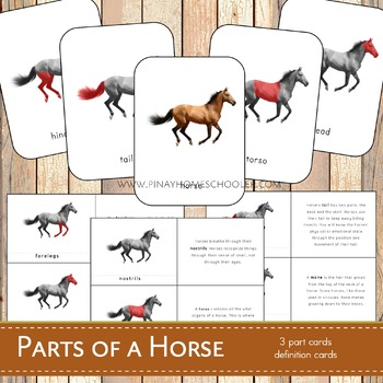 Parts of a Horse Montessori 3 Part Cards