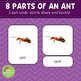 Parts of an Ant Montessori 3 Part Cards