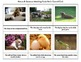 Montessori Picture & Sentence Matching Cards Set 1