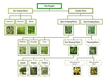 Montessori Plant Kingdom Chart