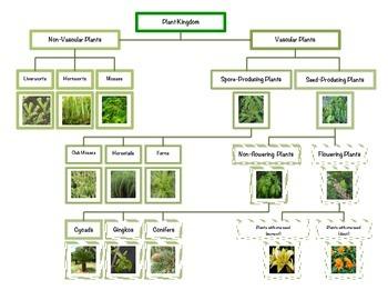 Montessori Plant Kingdom Chart