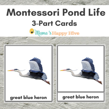 Montessori Pond Life 3-Part Cards