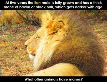 African Animals : Montessori principles using PowerPoint
