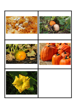 Montessori Pumpkin 3 Part Cards