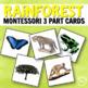 Montessori Rainforest 3 Part Cards