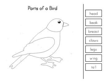Montessori Science: Parts of a Bird by My Montessori Maker ...