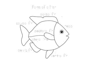 Montessori Science: Parts of a Fish