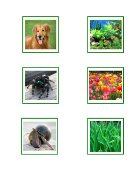 Montessori: Science - Plants and Animals