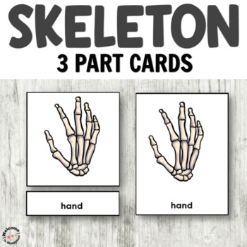 Montessori Skeleton 3 Part Cards