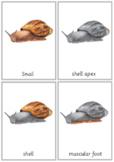 Montessori Snail Nomenclature 3-Part Cards