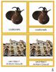 Montessori Spain 3-part Cards