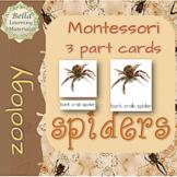 Montessori - Spiders  3 - Part Cards