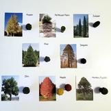 Montessori Tree Matching