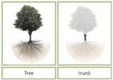 Montessori Tree Nomenclature 3-Part Cards