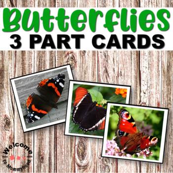 Montessori Types of Butterflies 3 part cards