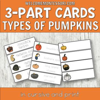 Montessori Types of Pumpkins 3 Part Cards