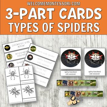 Montessori Types of Spiders 3 Part Cards