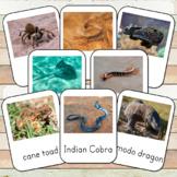 Montessori Venomous Creatures Toob 3 Part Cards