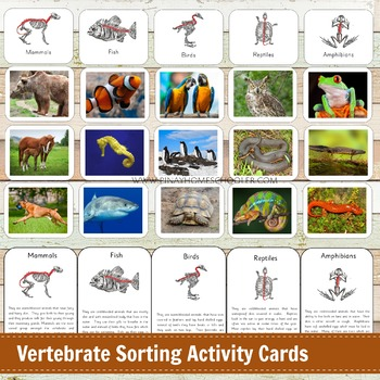 Classes of vertebrates pdf converter