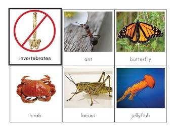Montessori Vertebrates vs. Invertebrates Picture Sorting Cards
