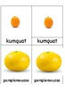 Montessori cartes nomenclatures FRUITS les agrumes FRENCH