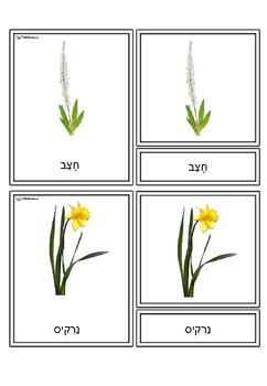 Montessori flowers cards -- Hebrew