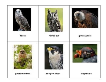 Montessori full 3 part Language Cards - Birds of Prey
